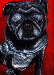 pug red