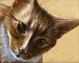 red tabby