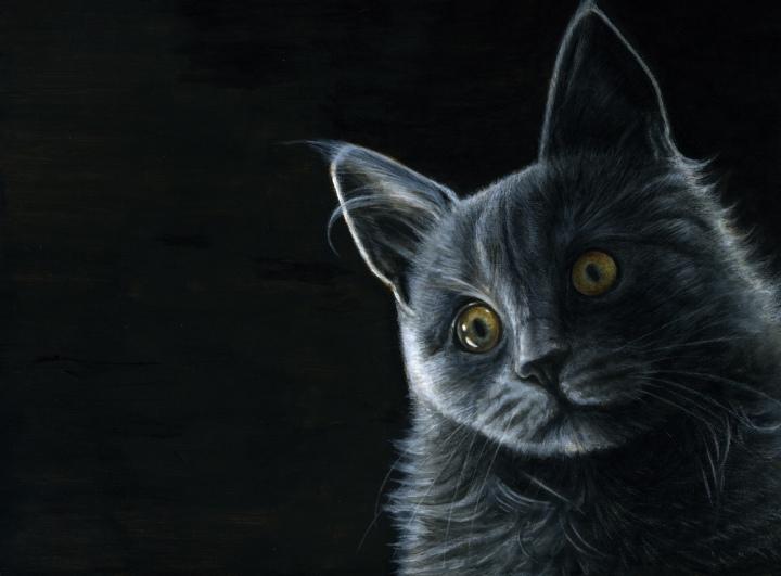 smokey cat